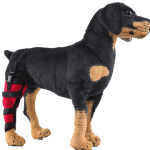 Do Knee Braces Work for Dogs?