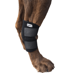 Dog Canine Rear Leg Hock Joint