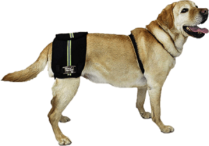 Dog Hip Braces