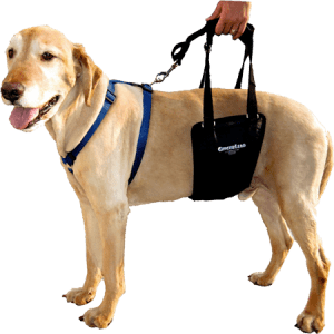 GingerLead Dog Strong Support and Comfortable