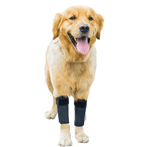 Protects Wounds Brace Heals