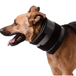Best Neck Brace for Dogs - 2021 Reviews