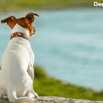 How To Make A Dog With A Slipped Disc Comfortable