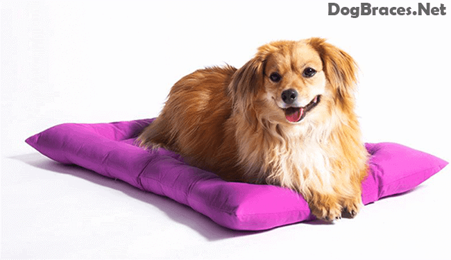 how to pick up a dog with a slipped disc